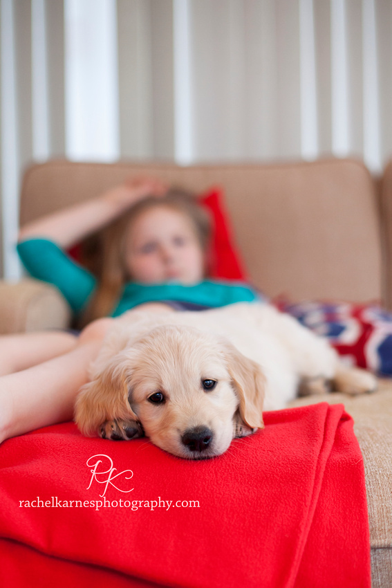 Golden Puppy laying at little girls feet