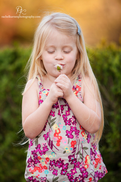Little girl with dandelion in williamsburg garden
